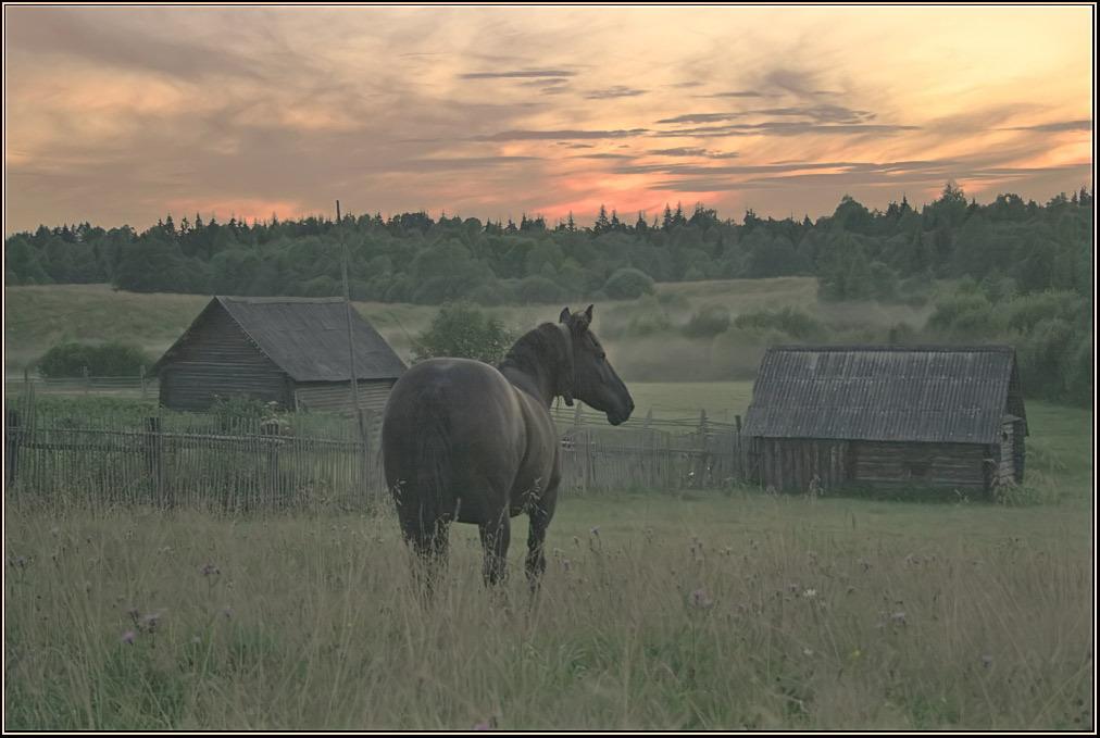 исток Волки конь бани вечер лето