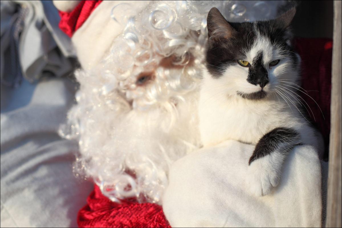 Дед Мороз и кот