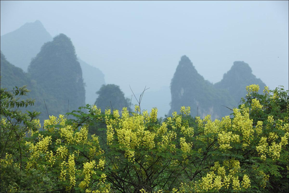 Карстовые холмы Янгшо весна