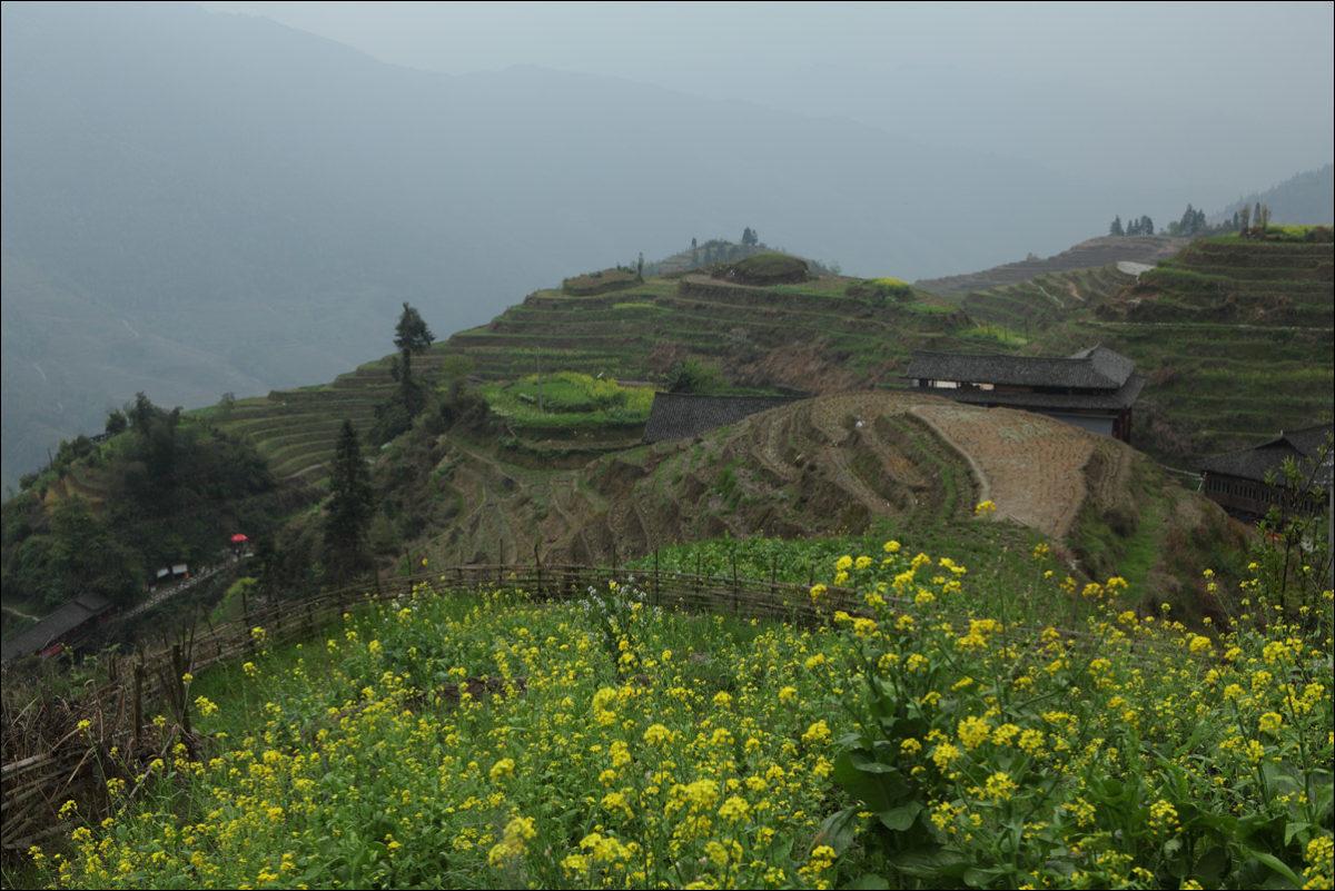 Рисовые террасы Пиньян весной Китай