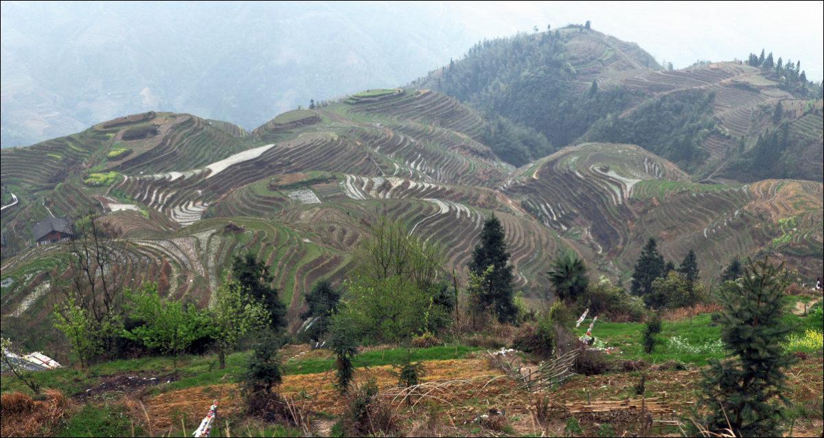 Рисовые террасы Пиньян весной