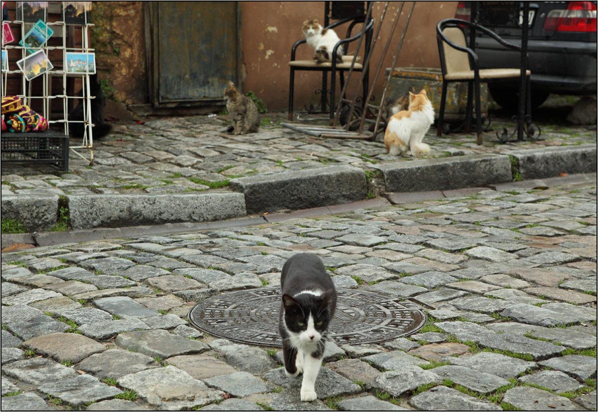 Коты Стамбула