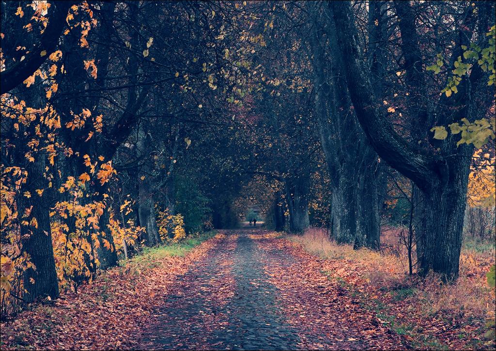 дубовая аллея осень
