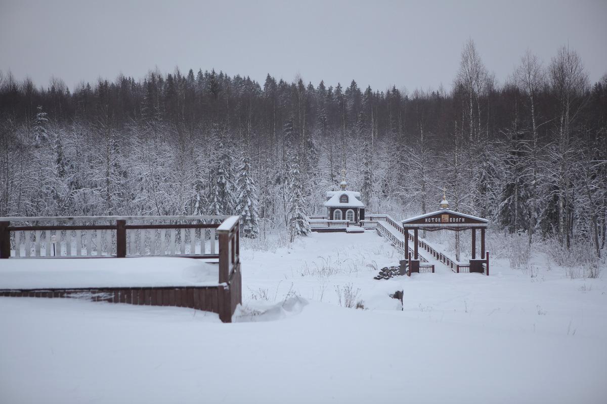 Заснеженный лес исток Волги